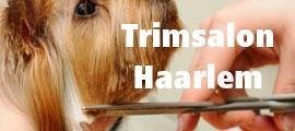 Trimsalon Haarlem